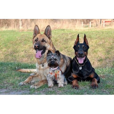 Kit para el test de perros