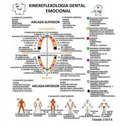 Lámina reflexología dental
