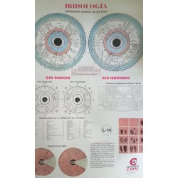 Lámina iridiología